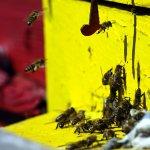 Goodbye Bugs Pest Control FL